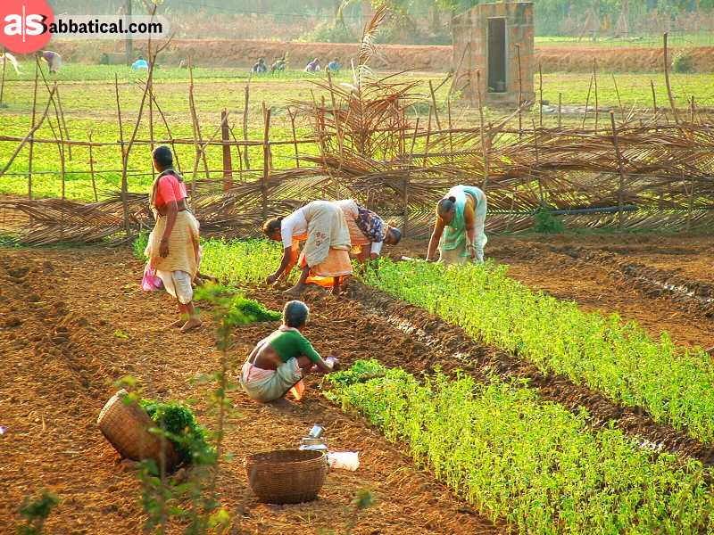Whether the system is socialistic or capitalistic, when the economy starts to grow the inequality will rise between industrial and agriculture sector.