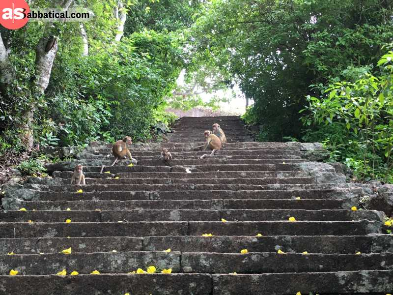 Anuradhapura is a city of great historical importance to Sri Lanka.