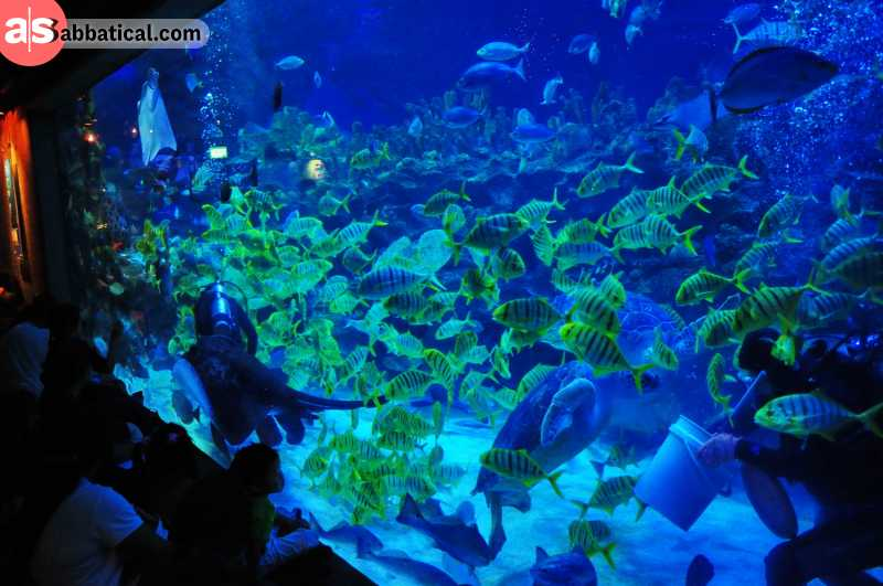 In Aquaria KLCC, there are a lot of majestic marine species to discover and meet head-on.