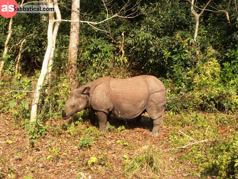 Chitwan National Park is home to the one-horned rhino.