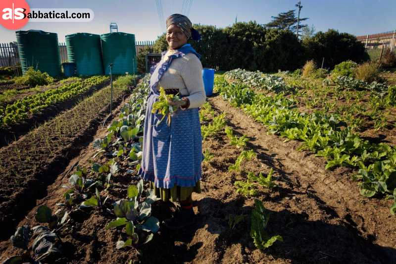 Farming in Africa is the key of getting out of the poverty cycle.