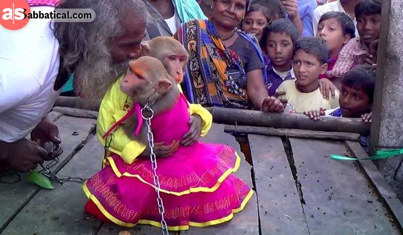 One of unusual facts of India is that animal marriages, such as this monkey marriage, are arranged to appease the Rain God who will in turn provide rain to vitalize the crops.