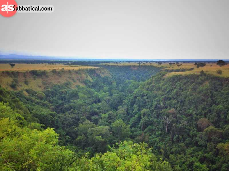 A magnificent sight, a forest inside a valley in Kyambura Game Reserve.
