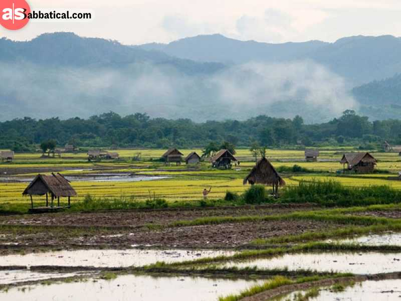 Rice paddy fields in Luang Namtha.