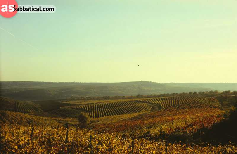 Moldavian landscape is full of vineyards, and vine is abundant there.