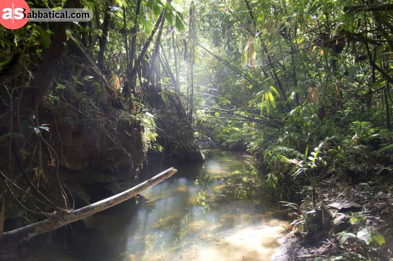 The state of Sarawak is full of lush rainforest that is off the beaten path.