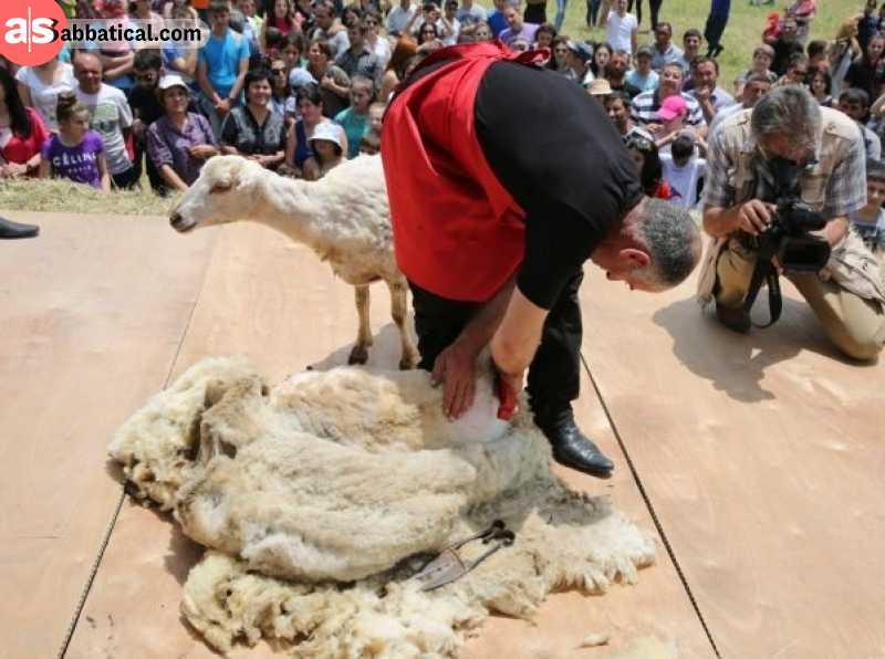 Sheep Shearing Festival in Armenia. Image Courtesy of Gardman Tour.