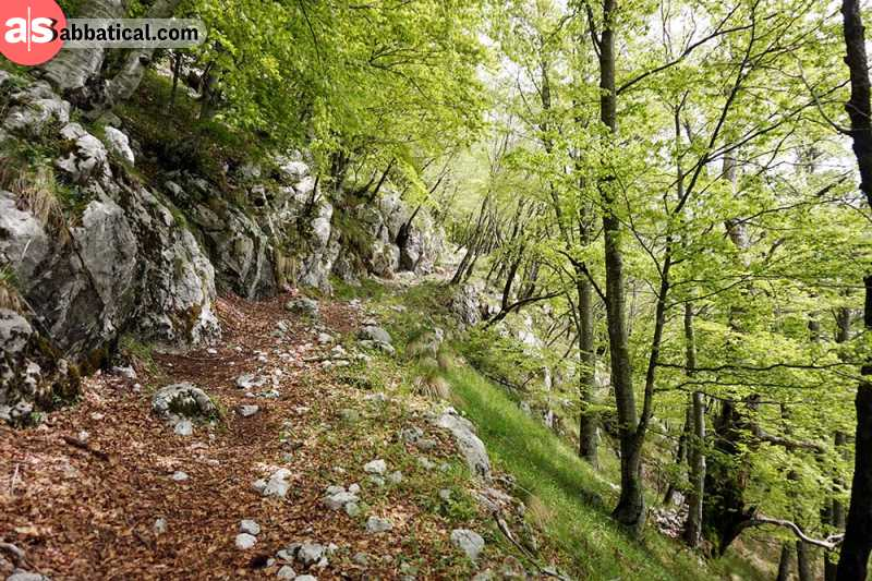 Slovenia has a special relationship with its forest.