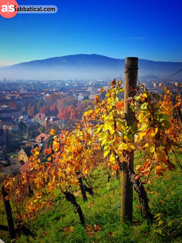 Wine in Slovenia starts its production process from vineyards like these.