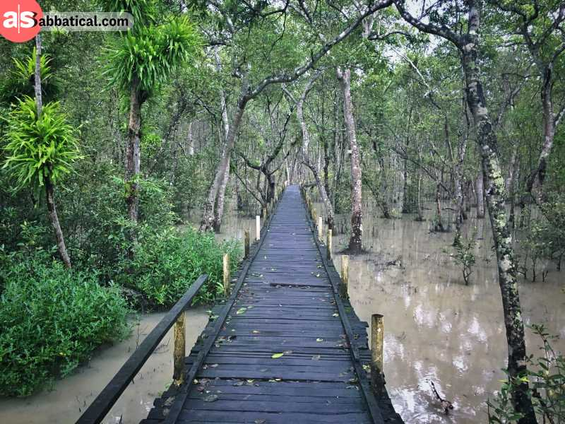 Sundarbans is the largest mangrove forest in the world.