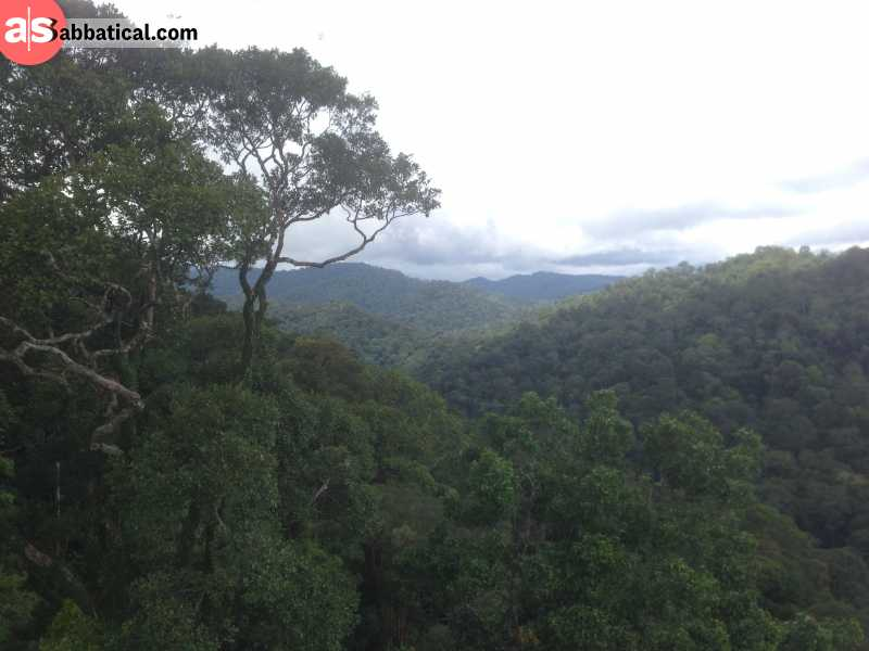 Ulu Temburong National Park holds one of the last unspoiled rainforests on Borneo Island.