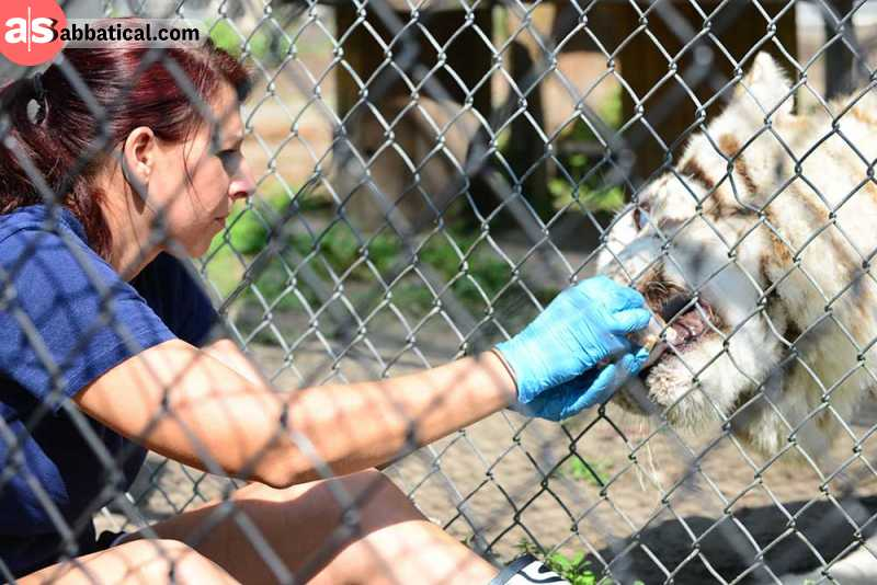 Feeding animals is just one volunteering project