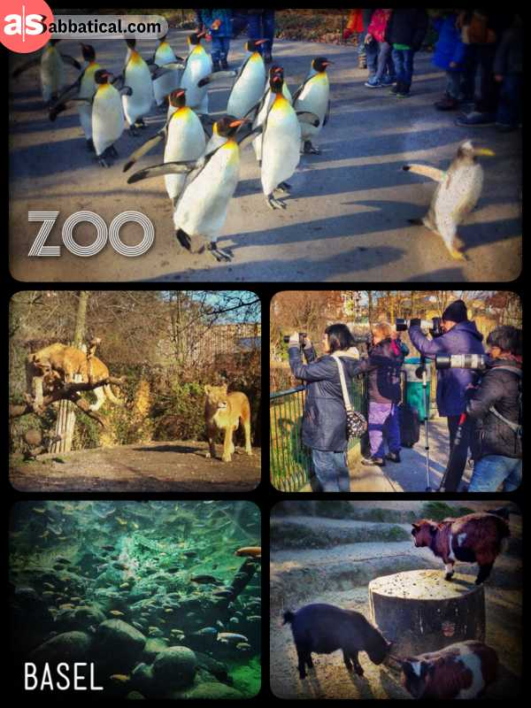 Zoo Basel - leisurely waddling through the zoo