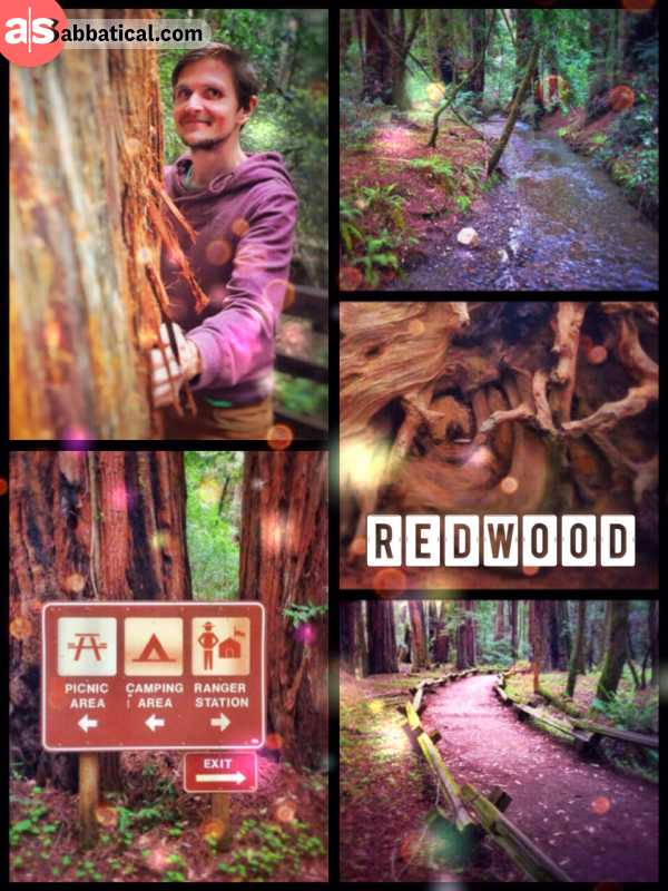 Redwood Forest - admiring and hugging some of the oldest and tallest trees on planet earth