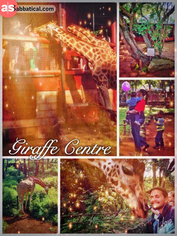 Giraffe Centre - feeding one of the most gracious species on this planet from the first floor