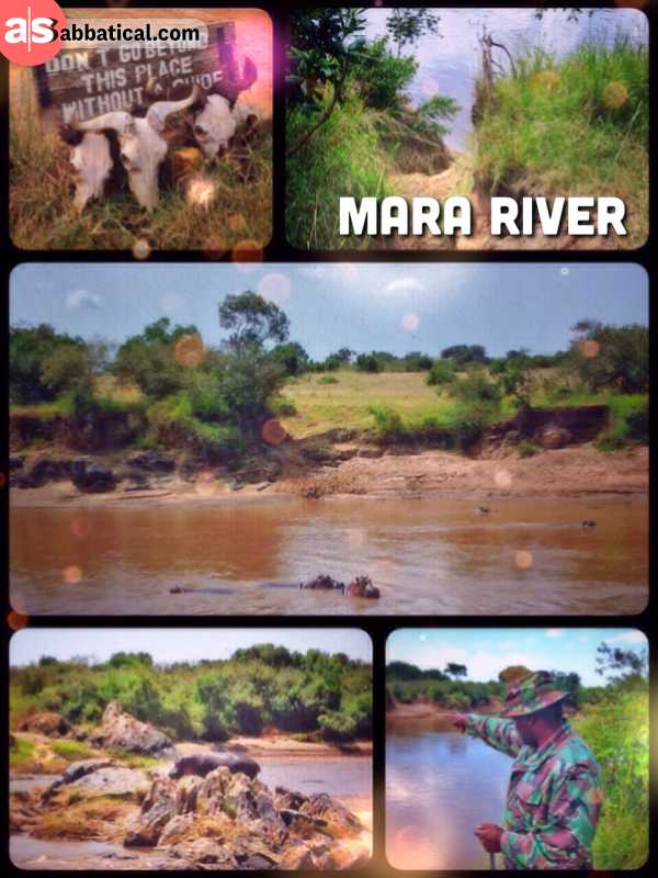 Mara River - observing lazy hippos during the quiet time before the great migration