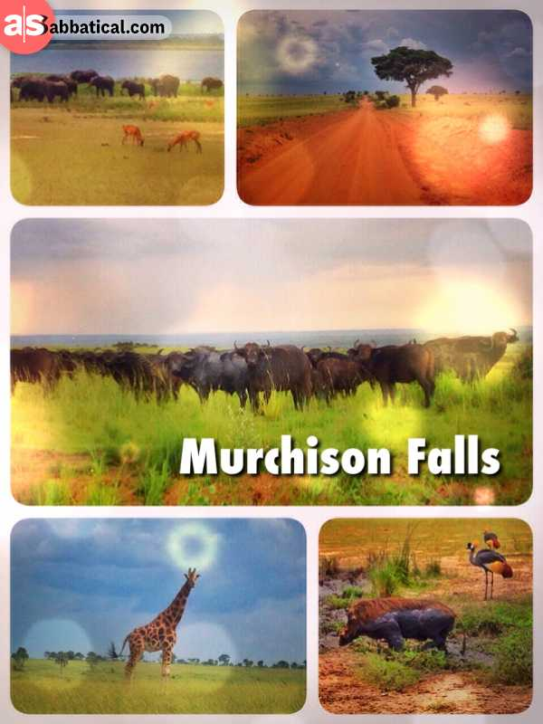 Murchison Falls - spotting countless wild animals on my very first independent Safari Game Drive