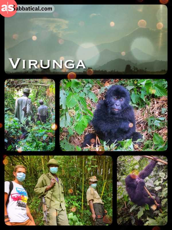 Virunga National Park - spending one magical hour with a lovely Gorilla family and two babies