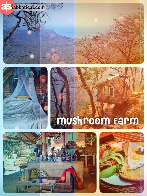 Mushroom Farm - sleeping in a tree house build on the mountain overlooking Lake Malawi