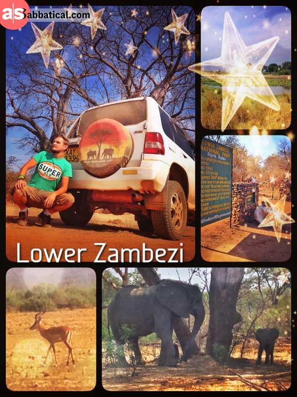 Lower Zambezi - driving slalom around many elephants, but not spotting a single lion in the park