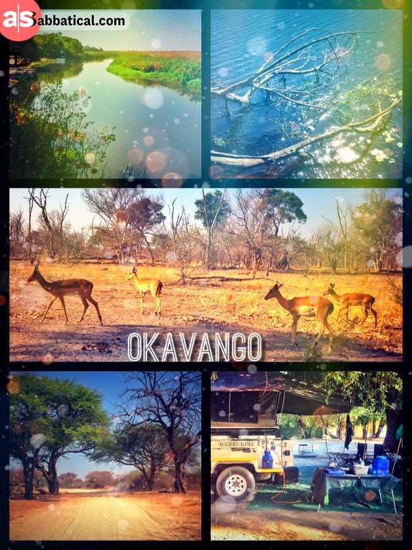 Okavango Delta - getting stuck and pulled out of deep sand and missing all the game in the park