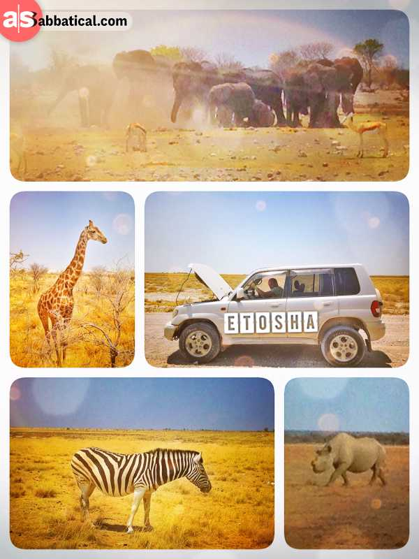 Etosha National Park - amazing self-driving Safari Game Drive - spotting endless animals around waterholes