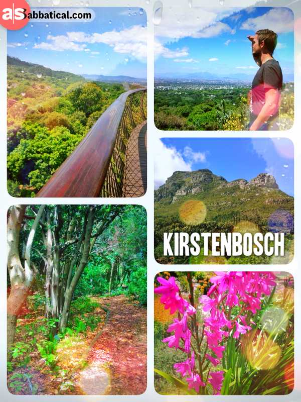 Kirstenbosch National Botanical Garden - hiking up the beautiful hills below table mountain for a stunning view over Cape Town