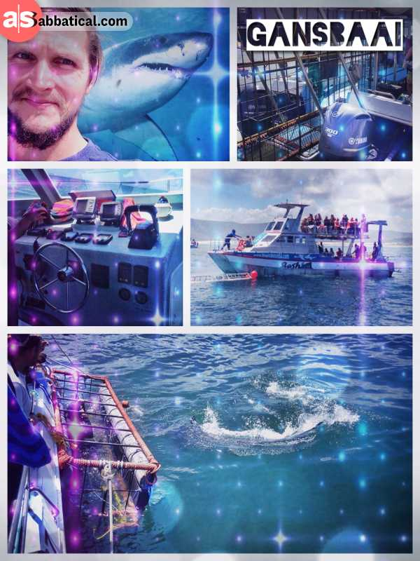 Gansbaai Shark Diving - watching some of the great white sharks instead of diving with them in a cage