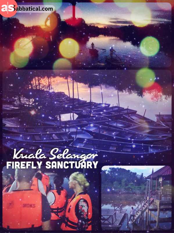 Firefly Sanctuary - protecting and breeding a unique species of glowing glowing insects