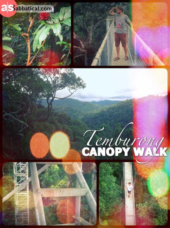 Canopy Walk Asabbatical