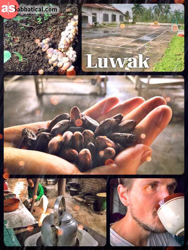 Luwak Coffee - drinking the world's strongest coffee after visiting a local plantation