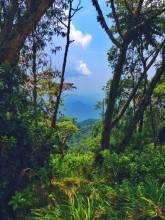 Hills and valleys in Rwanda: Nyungwe Forest on the border to Burundi