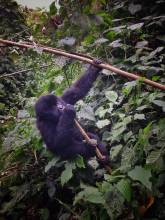 places to visit in the Congo