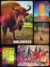 Belovezhskaya Pushcha - visiting the last European bisons and primeval forest
