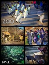 Zoo Basel - leisurely waddling through the zoo
