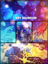 Bay Aquarium - epic nightlife event underneath the bay, clink your glasses with the fish