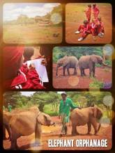 Elephant Orphanage - a place of rescue, rehabilitation and learning about a gracious species