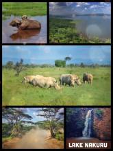 Lake Nakuru - finding a large family of rhinos instead of an endless group of flamingos