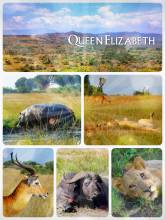 Queen Elizabeth National Park - game drive to the tree Lions in the oldest national park in Uganda
