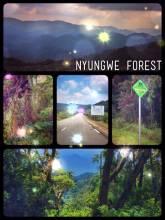 Nyungwe Forest - crossing Rwanda's thick and moist rainforest on a beautiful asphalt road