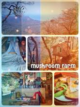 Mushroom Farm - sleeping in a tree house build on the mountain overlooking Lake Malawi