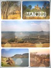 Matobos National Park - spotting Zebras near the campsite and walking up to a White Rhino