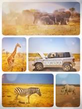 Etosha National Park - amazing self-driving Safari Game Drive - spotting endless animals around waterholes