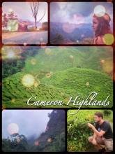 Cameron Highlands - growing tea, coffee and fruits in a temperate central high plateau