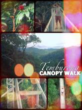 Canopy Walk - high above the Ulu Temburong National Park on Borneo