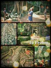 Ta Prohm - temple near Angkor Wat that is overgrown by trees and moss