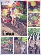 Tree Nursery - growing a variety of plants and trees for sales