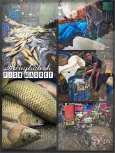 Fish Market Bangladesh - coming from a fish farm and ending up on a plate very soon