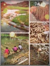 Bangladeshi Jute - an important industry and natural fibre for Bangladesh