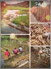 Bangladeshi Jute - an important industry and natural fibre for Bangladesh